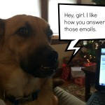 Working from home with a dog can be challenging and fun.