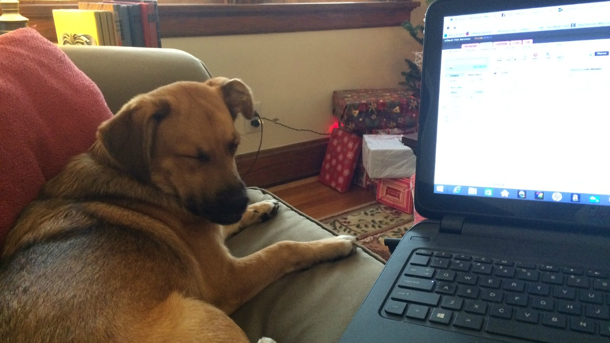 Working from home with a dog can be challenging and fun