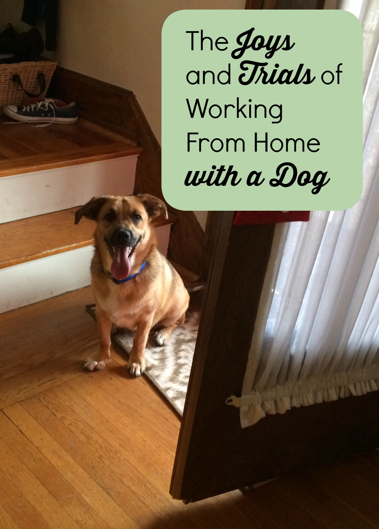 Getting a puppy can be like having another kid. I learned that working from home with a dog has its challenges and perks.