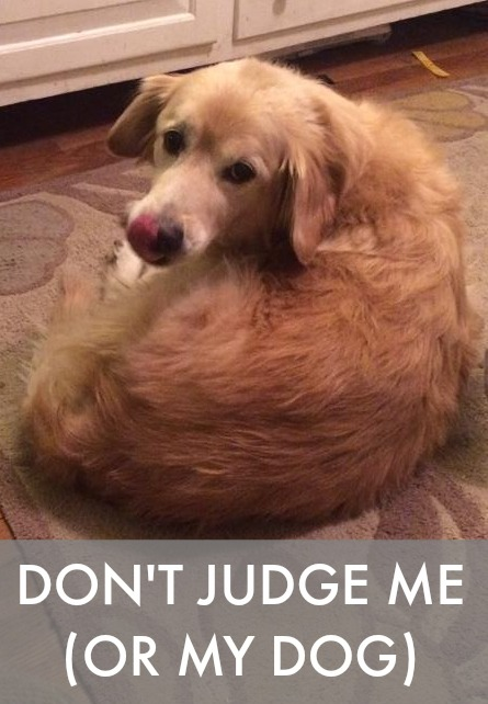 Ever had people comment on your dog and made you feel guilty about the time you spend (or rather, don't spend) with him? It's called dog judging. NOT COOL.