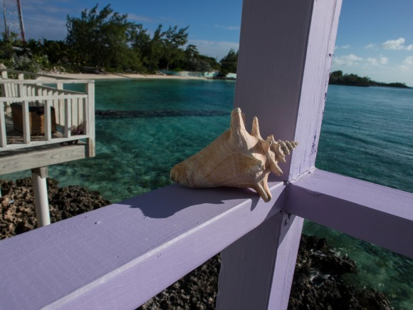 Over Winter? Me Too. Let's Go to the Bahamas!